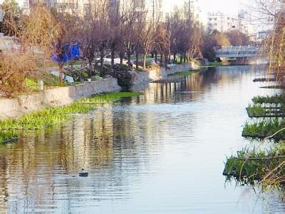 南京建邺区南湖东河一夜之间飘满污物